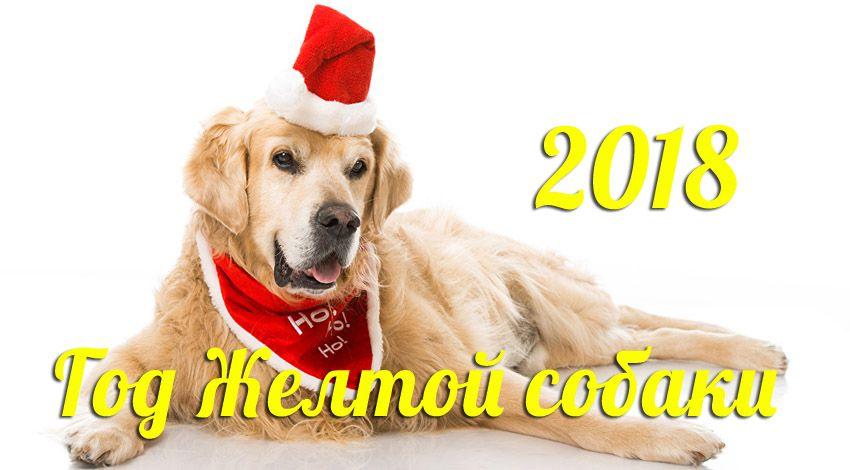 Год желтой собаки - 2018 год какого животного по гороскопу восточного календаря