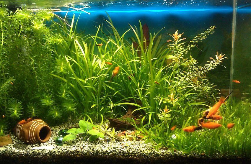 аквариум - что ещё можно подарить на Новый 2018 год тёще и тестю
